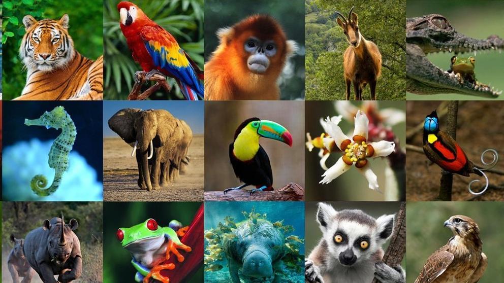 Celebra el mundo el «Día de los animales»